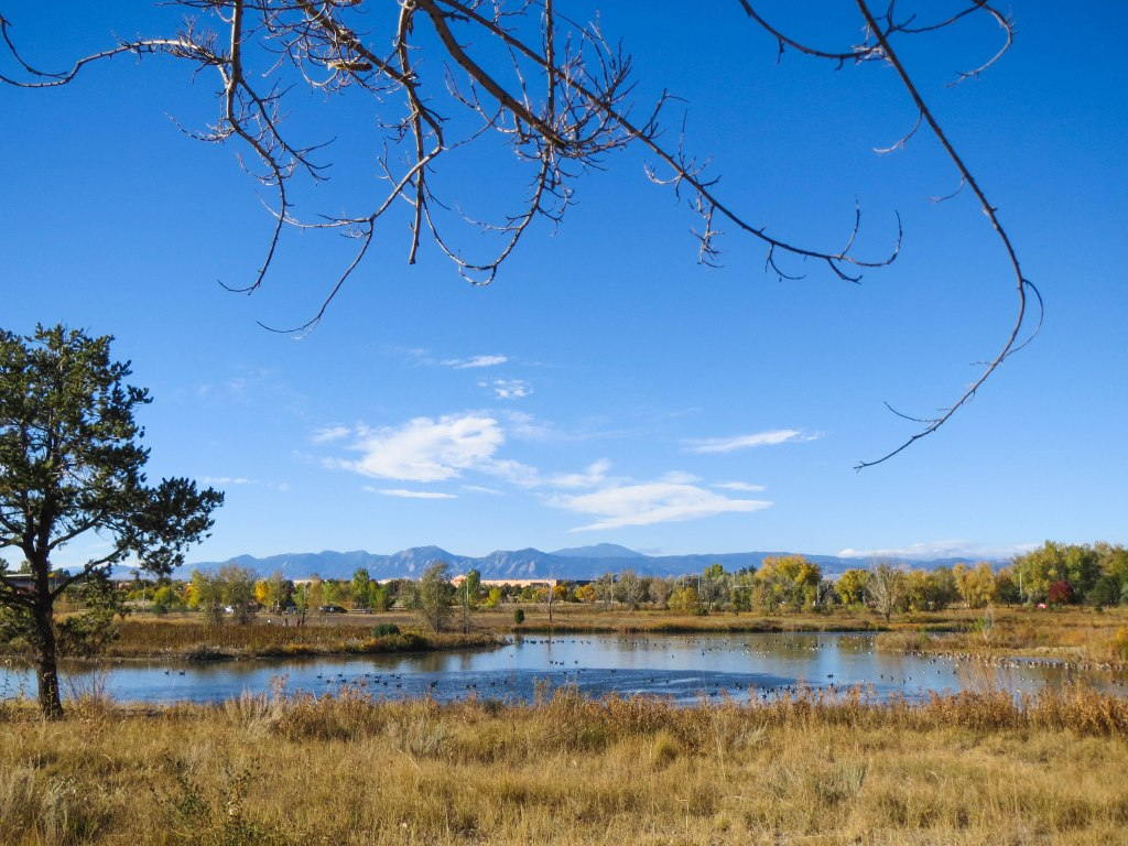 Golden Ponds_-0047