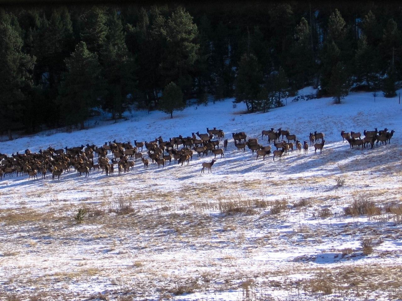 Bear Lake Trail-2937