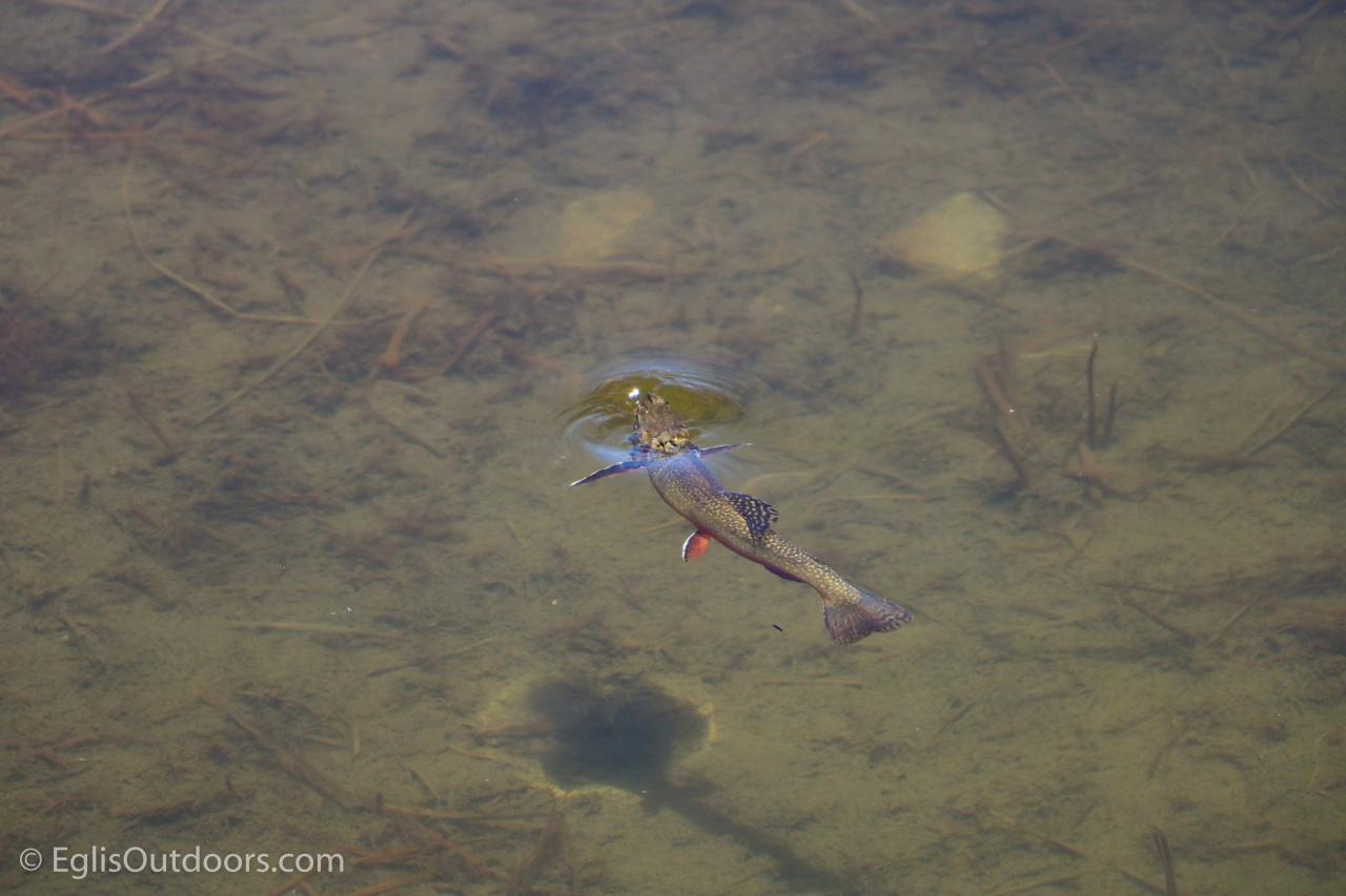 Lake Constantine_Eglis Outdoors-0813