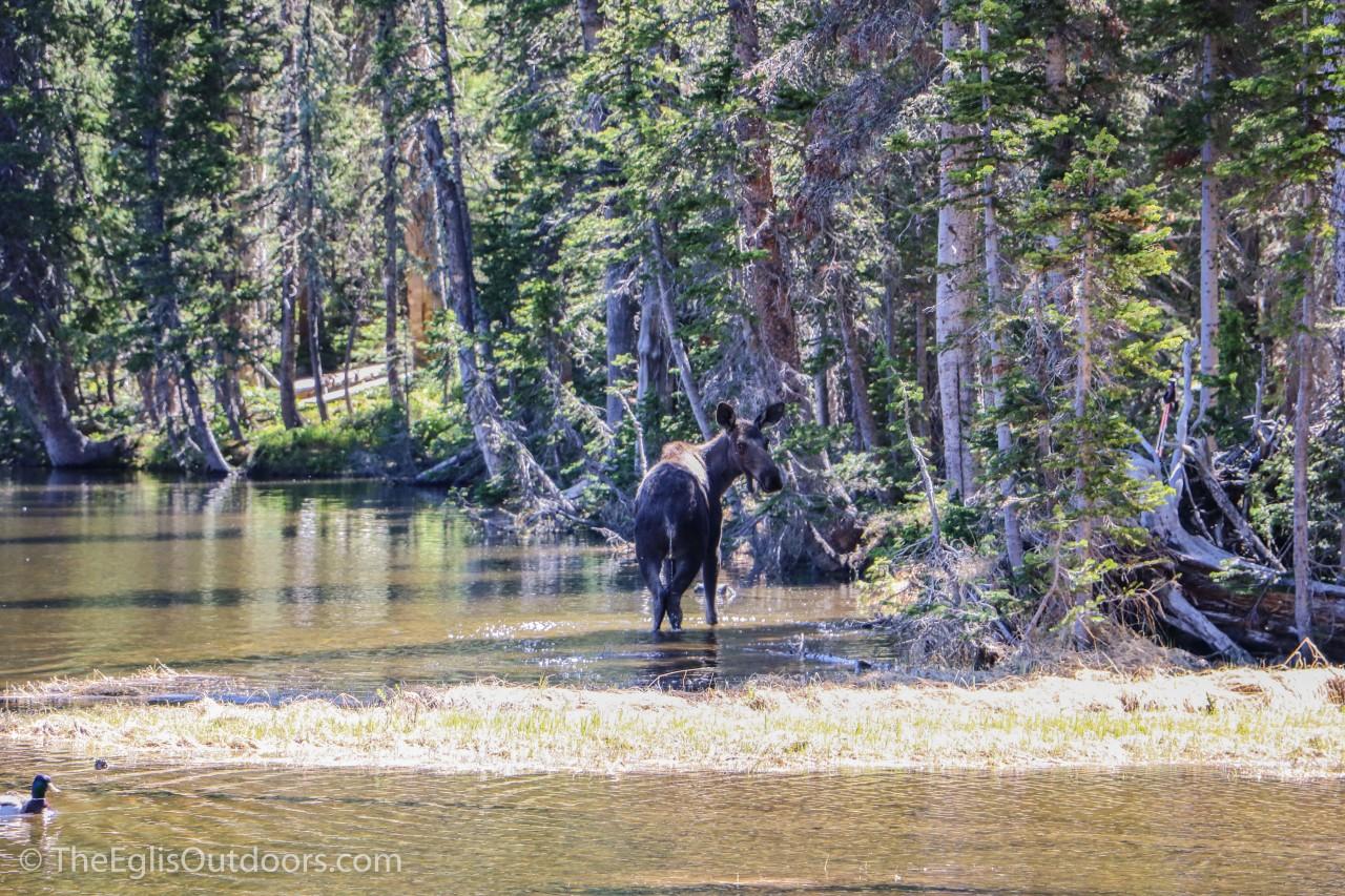 Fern Lake RMNP_The Eglis Outdoors-0078