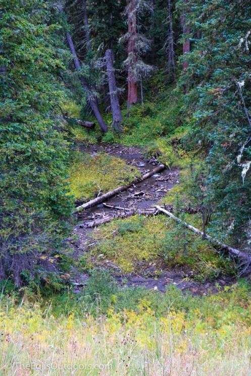 wilson-meadow_the-eglis-outdoors-1165