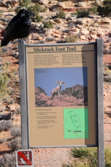 theeglisoutdoors_canyonlands-national-park-49